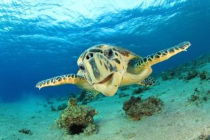 The Hottest Spots To See Sea Turtles in Hawaii