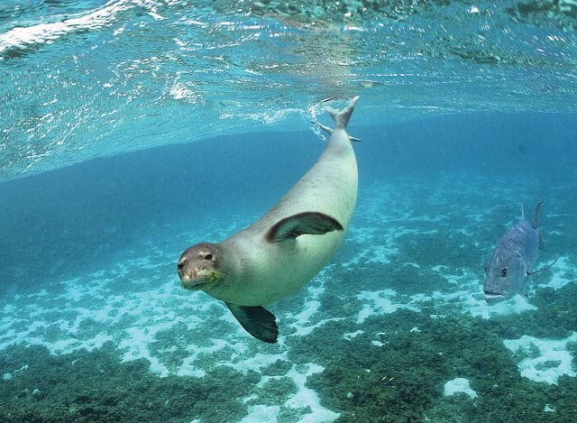The Top 10 Most Interesting Animals in Hawaii