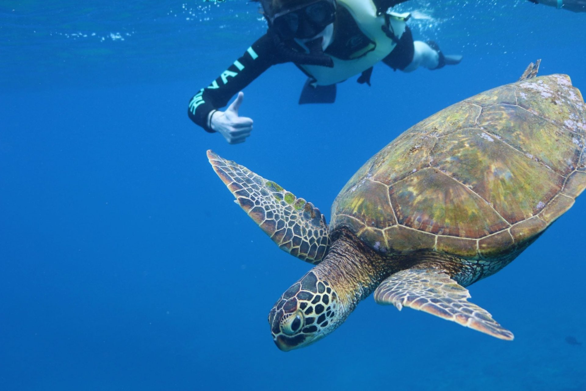 5 Ways You Can Help Save The Turtles