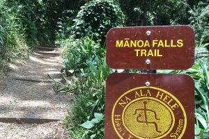 Manoa Falls Trail Closed