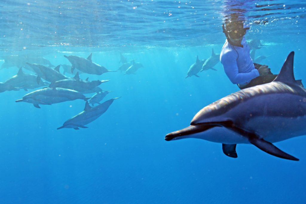 Swim with Dolphins in Hawaii
