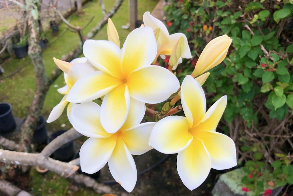 2020年ハワイ州はアメリカ50州の中で幸福度ナンバー1の州